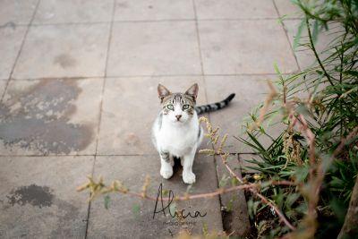 chat marrakchi