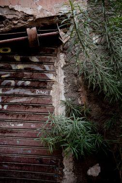 porte et plante Marrakech